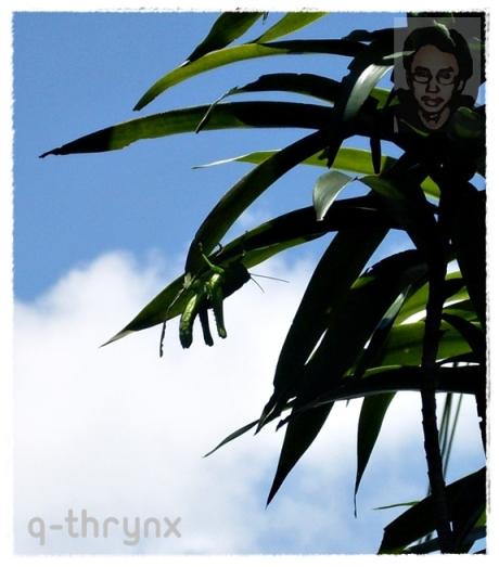belalang hijau menempel di daun