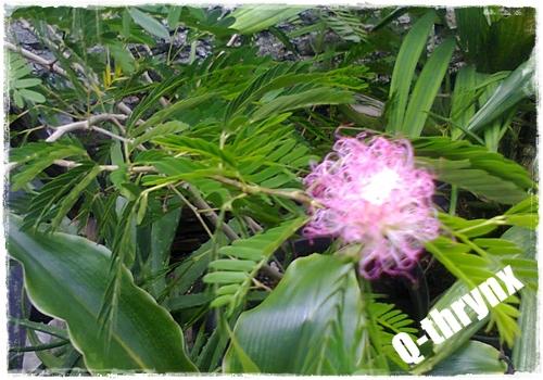 bunga apakah ini