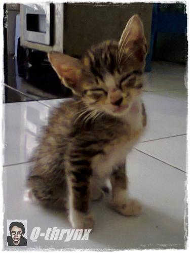 sleepy_cat