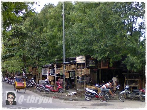 pasar burung jalan Thamrin Purwodadi