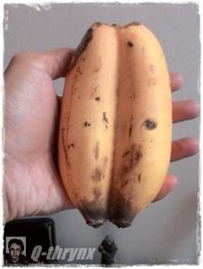 pisang dampit